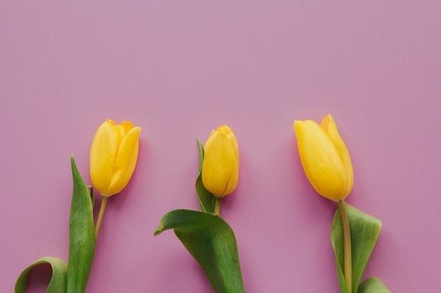 Los tulipanes amarillos en un fondo aislado rosado copian el espacio.