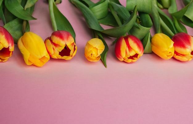 Los tulipanes amarillos y rojos en un fondo rosado copian el espacio. tulipanes holandeses.