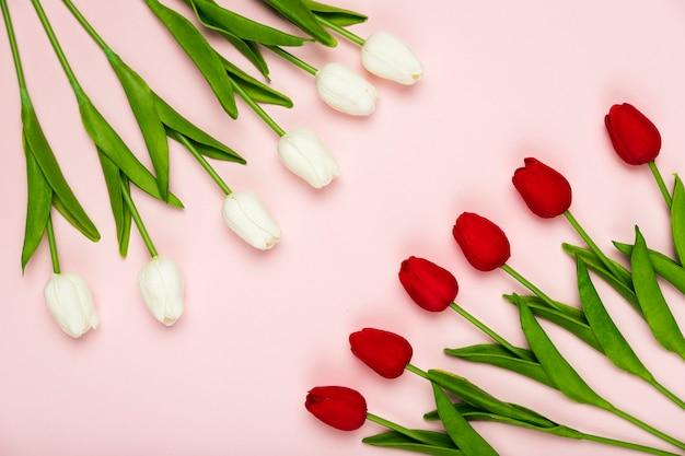 Tulipanes blancos y rojos alineados en la mesa