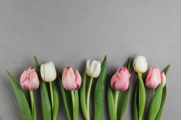 Tulipanes blancos y rosados frescos en fondo concreto gris