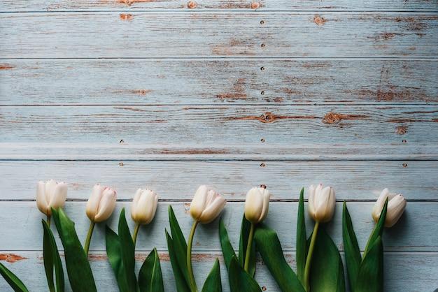 Tulipanes blancos sobre fondo azul de madera. composición plana, vista superior con copyspace