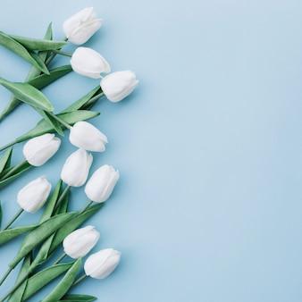 Tulipanes blancos sobre fondo azul pastel con espacio en el lado derecho
