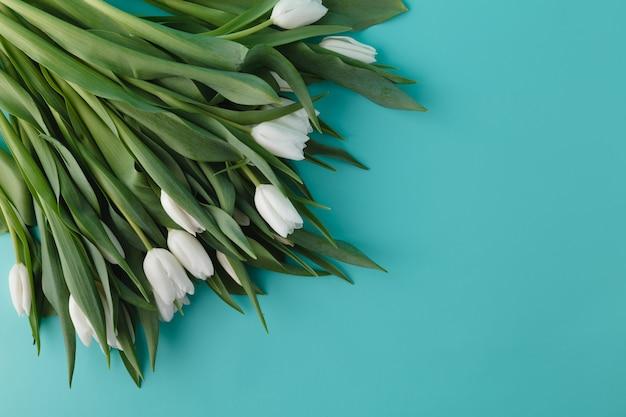 Tulipanes blancos yacían en la esquina ñ ‰ ð¸ fondo azul