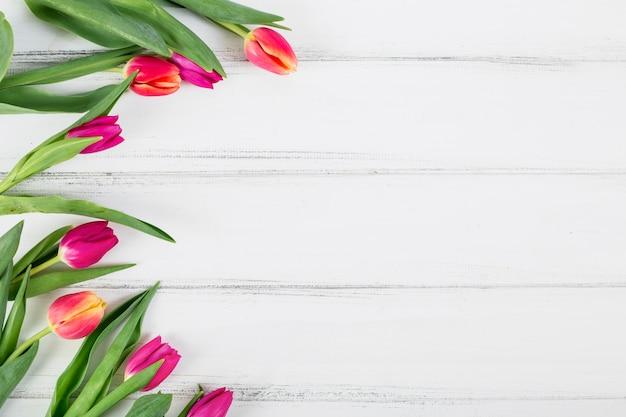 Tulipanes brillantes colocados en semicírculo.