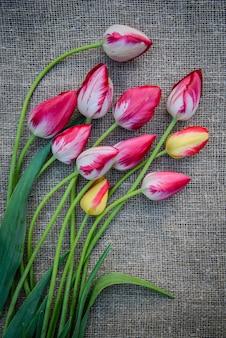 Tulipanes brillantes sobre tela de lona