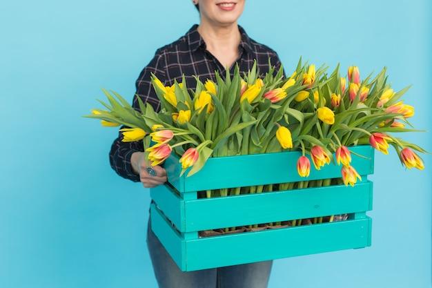 Tulipanes en caja en pared azul en manos de mujeres
