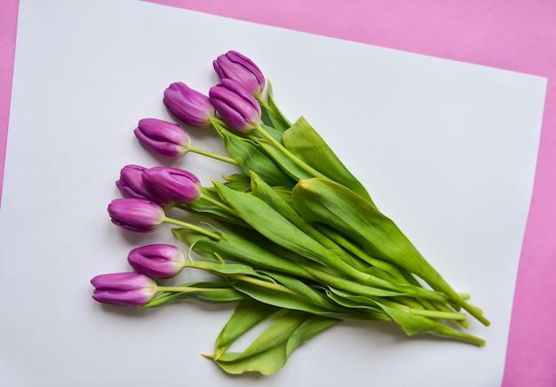 Tulipanes de color púrpura sobre papel blanco