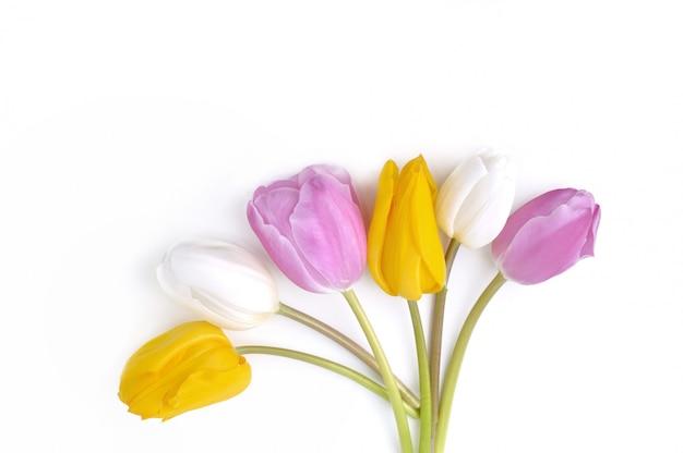 Tulipanes coloridos y bonitos