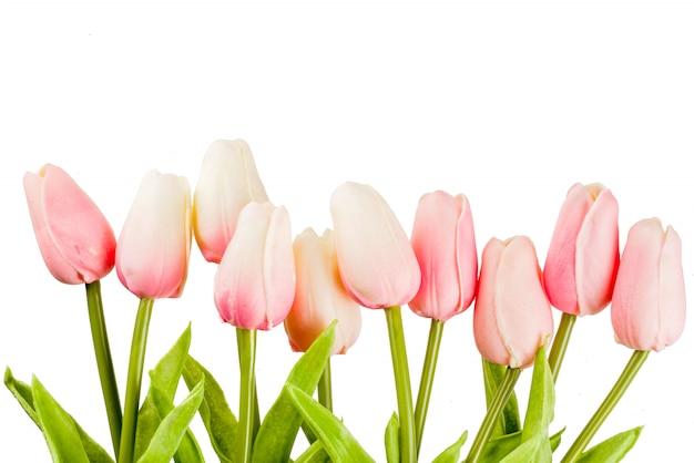 Tulipanes de flores de primavera rosa