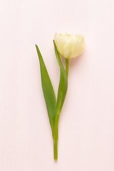 Tulipanes de flores de primavera sobre fondo de colores pastel. estilo retro vintage.