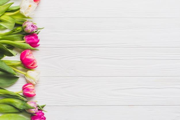 Tulipanes frescos en blanco
