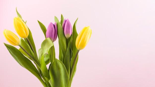 Tulipanes frescos y hojas verdes