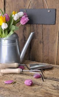 Tulipanes frescos en una regadera