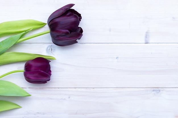 Tulipanes negros colocados uno al lado del otro detrás de una superficie blanca