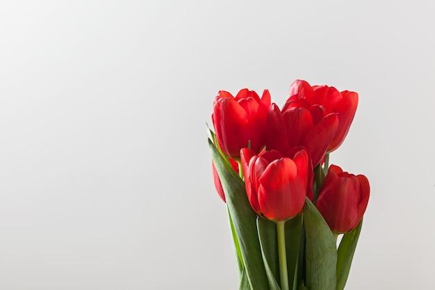 Tulipanes rojos en un fondo blacno