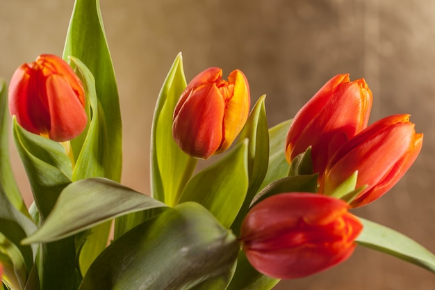 Tulipanes rojos sobre fondo dorado