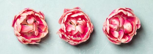 Tulipanes rosados sobre fondo azul, vista superior