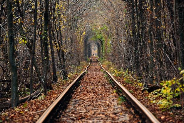 Túnel de amor en otoño. ferrocarril y túnel de árboles
