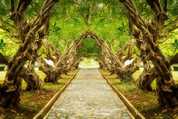 Túnel del árbol plumeria con camino rocoso en el medio