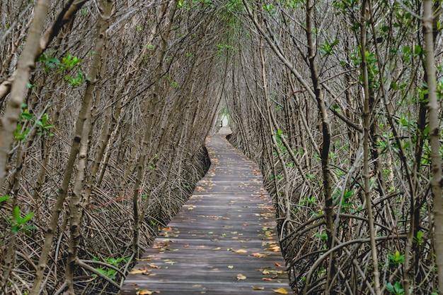 Túnel de árboles, puente de madera en bosque de manglares