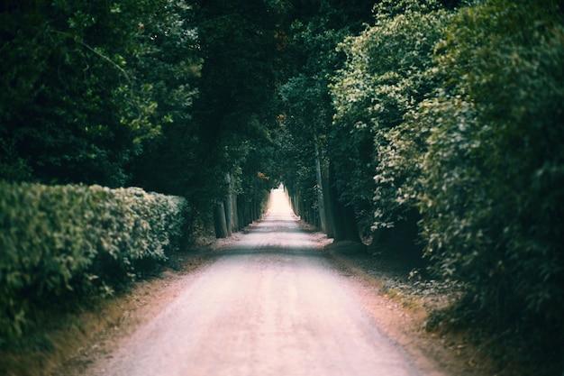 Túnel natural formado por árboles.