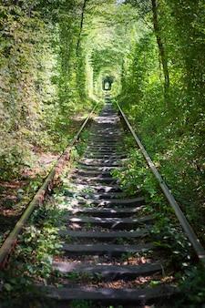 Tunner verde en el bosque. lugar de amor