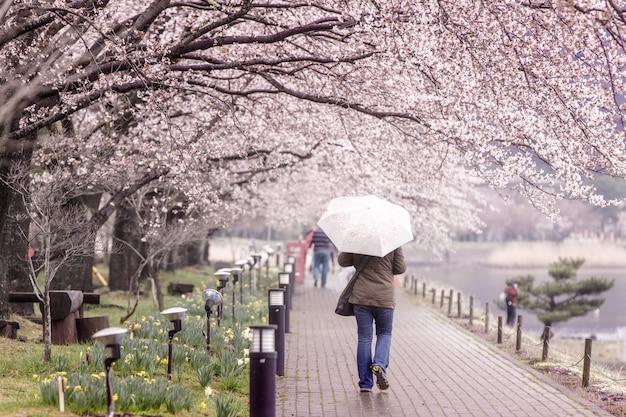 Turismo caminando por el sendero de los cerezos en flor en el lago kawaguchi