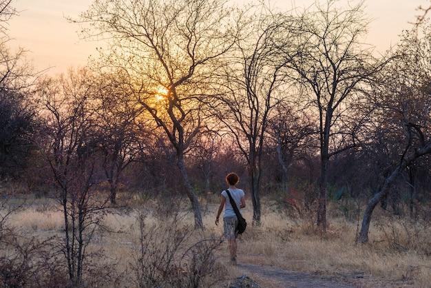 Turista caminando en el bosque de arbustos y acacia al atardecer, bushmandland, namibia. aventura y exploración en áfrica.