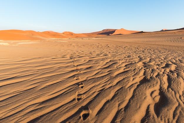 Turista caminando por las pintorescas dunas de sossusvlei, desierto de namib,