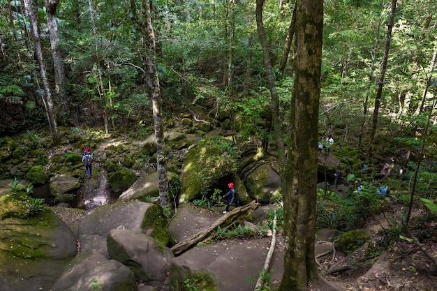 Turistas caminando en el bosque
