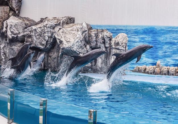 Los turistas usan las vacaciones para relajarse observando actuaciones de delfines y leones marinos en el safari world park, bangkok, tailandia