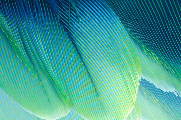 Turquesa verde y fondo azul de la textura de la pluma