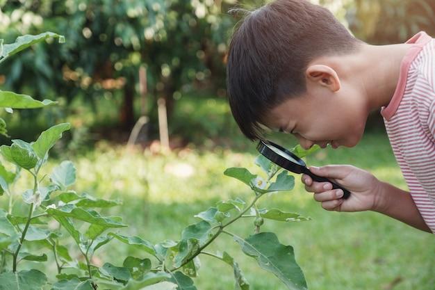 Tween niño asiático mirando las hojas a través de una lupa