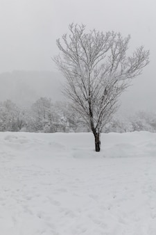 Ubicación de shirakawa-go de árboles y nieve en japón