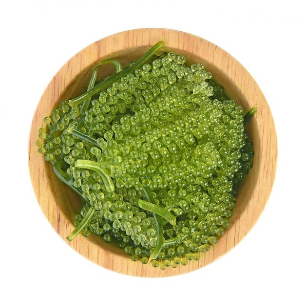 Umi-budou, uvas algas o caviar verde aislado sobre fondo blanco