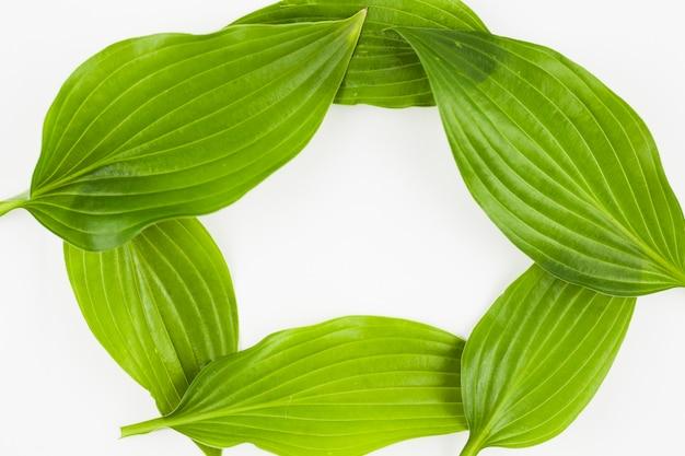 Un marco vacío hecho con hojas verdes sobre fondo blanco