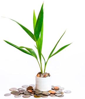 Una planta y dinero