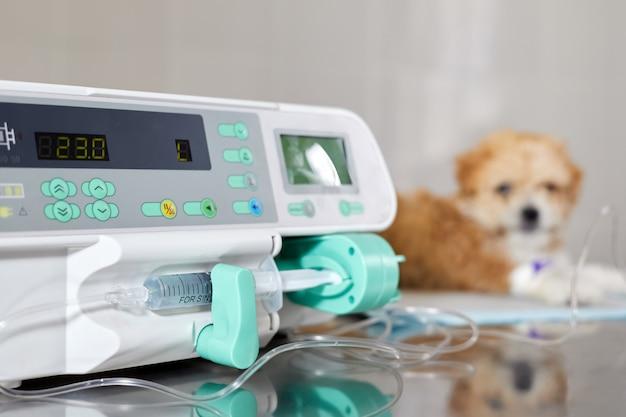 Se utiliza una bomba de infusión para inyectar lentamente la medicina a un cachorro maltipoo enfermo en una clínica veterinaria