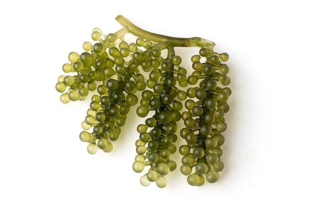Uvas de mar o caviar verde aislado sobre un fondo blanco, es una planta acuática comestible