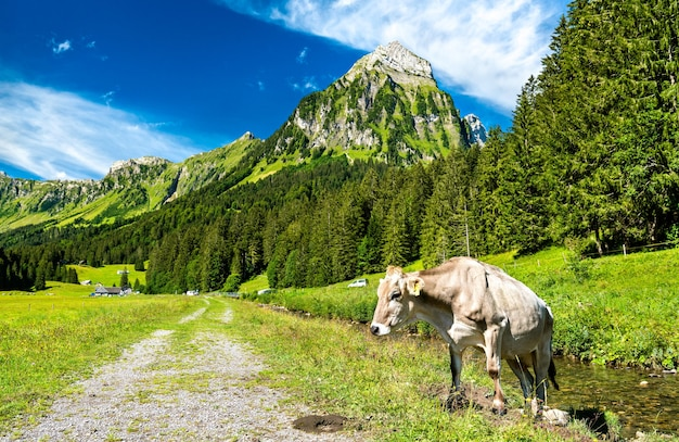 Vaca en los alpes suizos