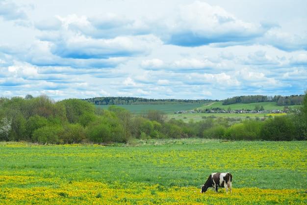 La vaca camina en el campo contra el pueblo.