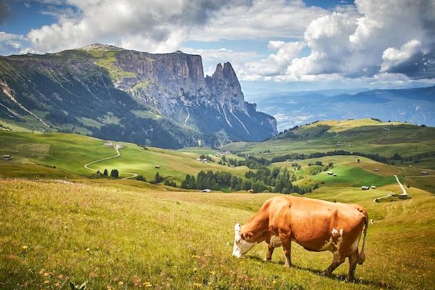 Vaca marrón pastando en un prado verde rodeado por altas montañas rocosas