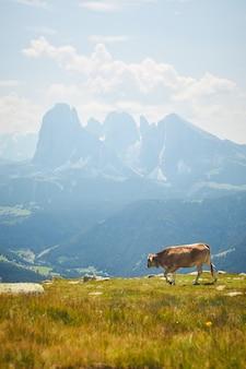 Vaca pastando en un prado verde rodeado de altas montañas rocosas