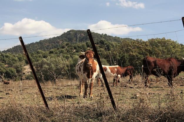 Vacas en un paisaje de granja