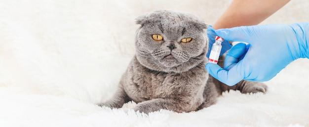 Vacunación de gatos. medicina veterinaria
