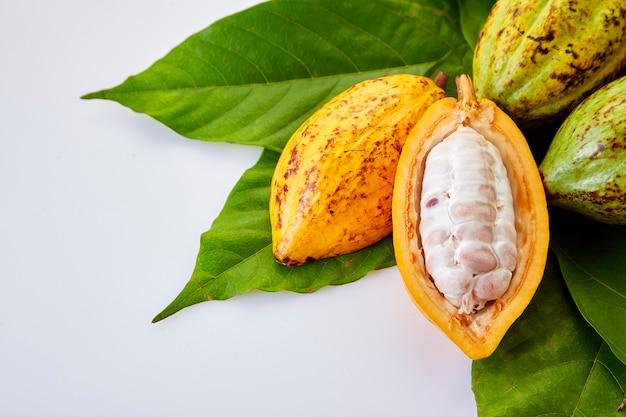 Vainas de cacao con hoja de cacao sobre un blanco.