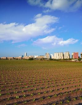 Valencia campos agrícolas y horizonte