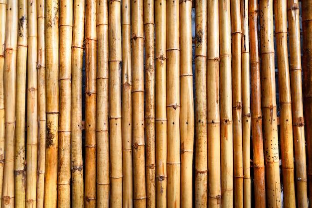 Valla de bambú de textura - fondo de bambú