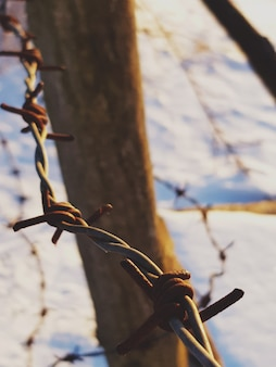 Valla de púas oxidadas invierno