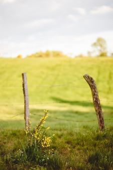 Valla de madera vieja en el campo de hierba en un día soleado